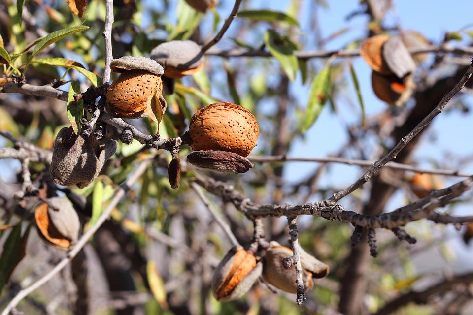 almonds-5299072_960_720